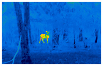 Thermography Infrared Thermal Imaging Rochester Ny